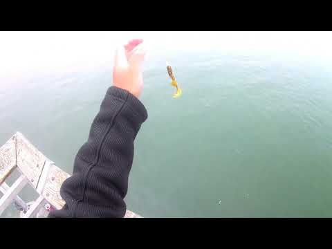 Des Moines Marina Pier Washington Lesson 1: Fish Love Grubs