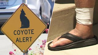 90-Year-Old Man Fends Off Coyote In 'Unusual' Attack