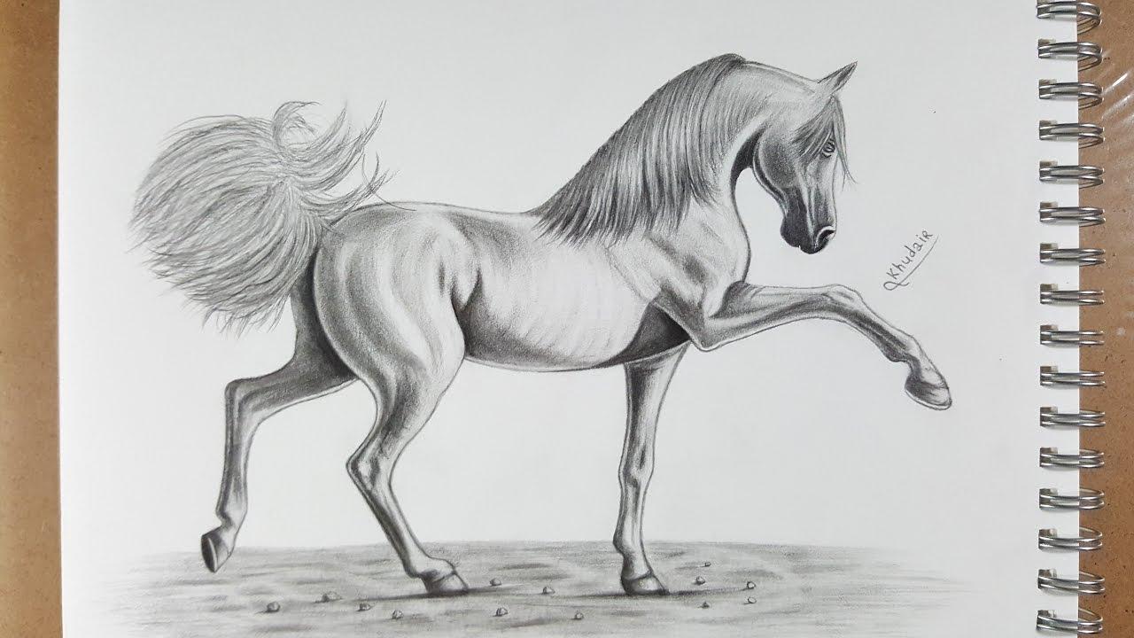 كيفية رسم حصان بالقلم الرصاص How To Draw Horse In Pencil Youtube