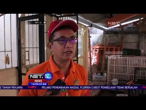 BKSDA Sita 3 Elang Laut Dari Warga Kebumen - NET 12