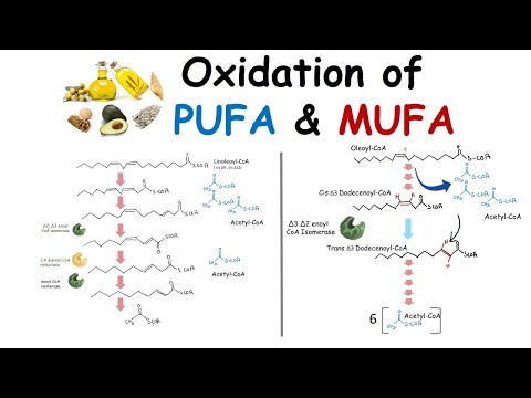 Oxidation Of Unsaturated Fatty Acid (PUFA And MUFA Oxidation)