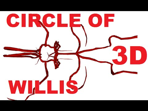 Circle Of Willis Anatomy Cerebral Circulation Youtube
