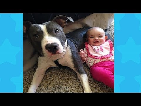 Funny Dog with Baby belly laughing very happy #2 | Dog loves Baby Videos
