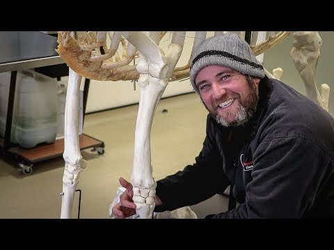 The Equine Skeleton - Thoracic (Fore) Limb with Paul Conroy Bsc (Hons)