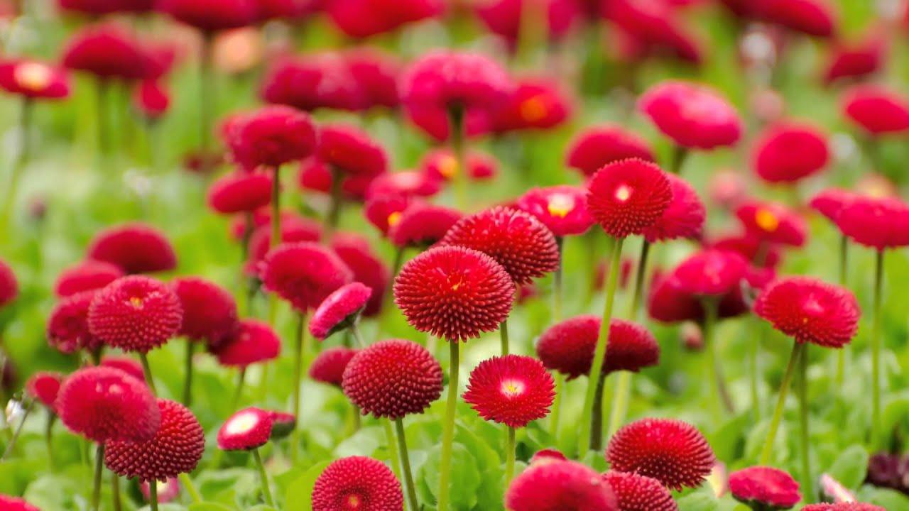Beautiful Flowers 4 U Hd 720p 1080p Youtube