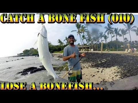 Catching Bone Fish (Oio) In Hawaii - Big Island, Hawaii Fishing Video - Braddahs On Da Shore - 52