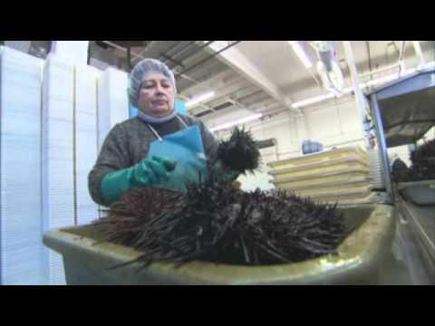 Experts  Seas heading for mass extinctions - World news - World environment - msnbc.com.flv