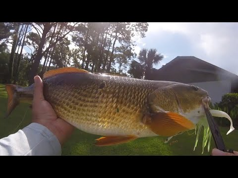 Bass And Redfish In The Same Hilton Head Pond