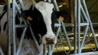 Sarthe/Conflit laitier : 280 Euros la tonne!