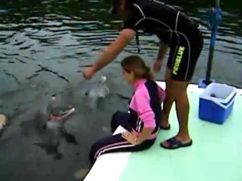 Дельфины сами как людичувствуют человека а дельфины