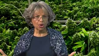 The Hemp Industry in Hawaii (Cannabis Chronicles)