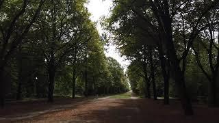 【DJI OSMO POCKET】【4K】ヴァンセンヌの森を歩く〜BOIS DE VINCENNES〜