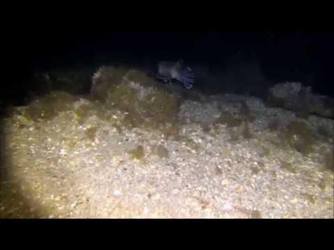 Underwater Photo/Video Light - MAKO Spearguns