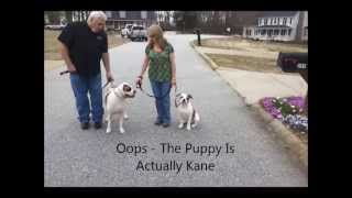 Kane Conquers His Leash Fear Utube