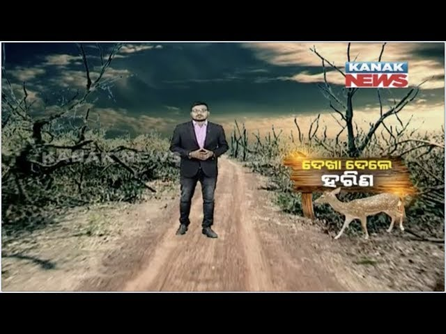 Special Report: PCCF Ajay Kumar Mohapatra Claims Missing Deers Are Safe In Balukhand Sanctuary