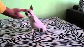 Кучето на Метин Енимехмедов !!! / Kucheto na Metin Enimehmedov !!!
