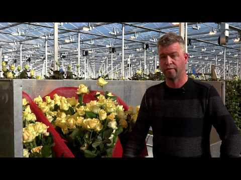 ReviewPartner ReviewVideo Van den Berg RoseS