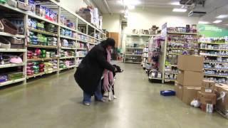 Petsmart Dog Training..