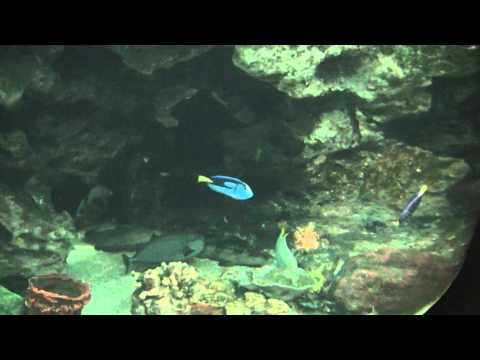 Coral Reef And Beautiful Colorful Fish Swimming By