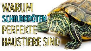 🐢 Schildkröten sind toll! 5 Fakten, die das beweisen