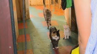 Пензенская пенсионерка оставила почти 30 кошек одних в квартире без еды и воды