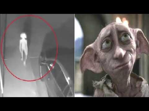 Maui - Strange Thing Caught On Camera That Resembles Harry Potter Elf 'Dobby'