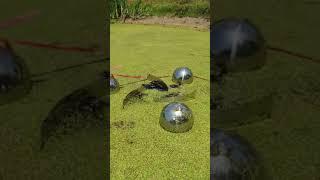 개구리밥, 해캄 제거