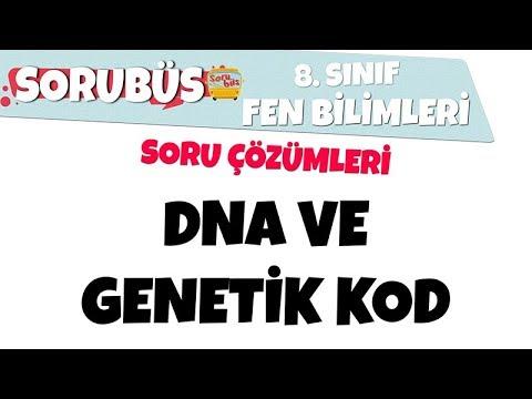 Sorubüs Soru Çözümleri - DNA ve Genetik Kod