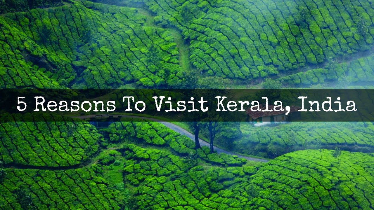 5 Reasons To Visit Kerala, India | My Food Odyssey