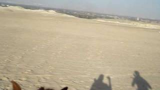 Weird Horses and Pyramids in Cairo