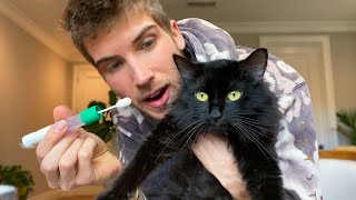 Giving My Pregnant Cat A DNA Test!