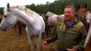 Новосибирское коннозаводство
