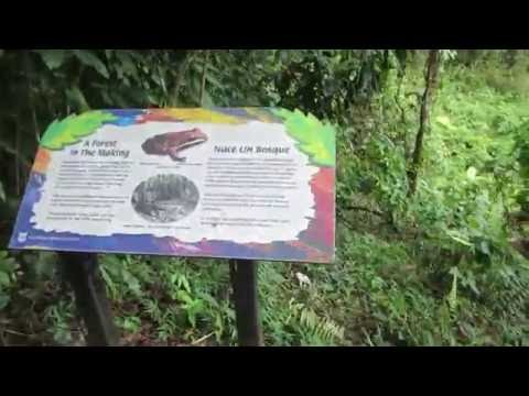 El Yunque National Forest hiking trail in Puerto Rico