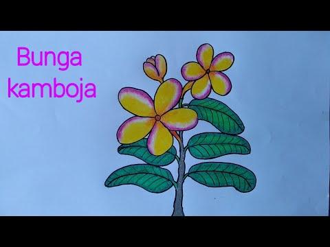 Cara Menggambar Bunga Yang Mudah Menggambar Bunga Kamboja Youtube