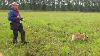 Zheleznaya Burya Ruizhaia Bestia. Tracking training. Trackman System.