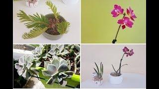 Орхидеи приехали на море: посадка. Адениумы и кошачий наполнитель.