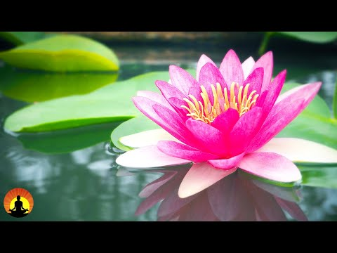 ? Relaxing Music 24/7, Meditation, Healing, Sleep, Calming Music, Zen, Yoga, Relax, Study, Spa   New MUSIC Song Download   Mp3 Mp4 3gp video Song download