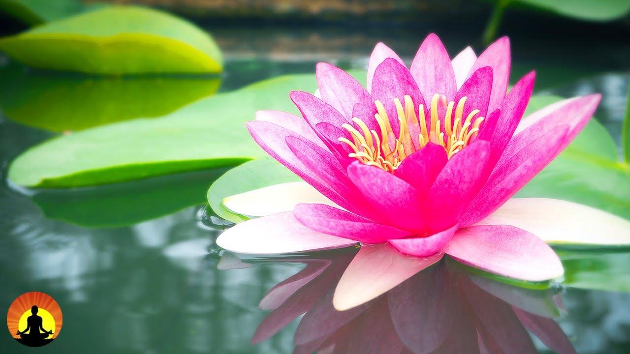 ???? Relaxing Music 24/7, Meditation, Healing, Sleep, Calming Music, Zen, Yoga, Relax, Study, Spa