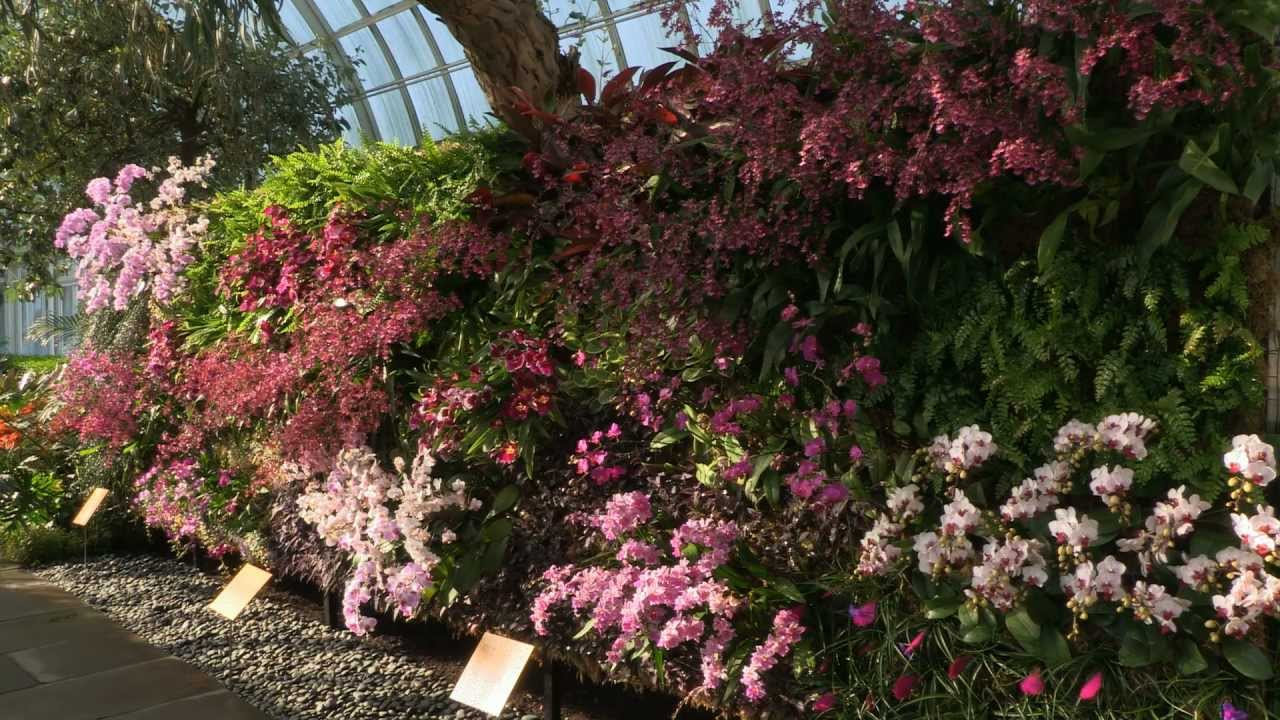 The Orchid Show: Patrick Blanc\'s Vertical Gardens - YouTube