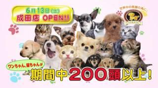 2015/6/13,ペットショップCoo&RIKU成田店が千葉県成田市でグランドオー...