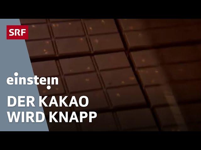 Die Zukunft der Schokolade: Die Schoggi-Lust steigt, doch der Kakao wird knapp   SRF Einstein