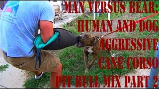 Man Versus  Bear: Human And Dog Aggressive Rottweiler/pit Bull Mix Part 2
