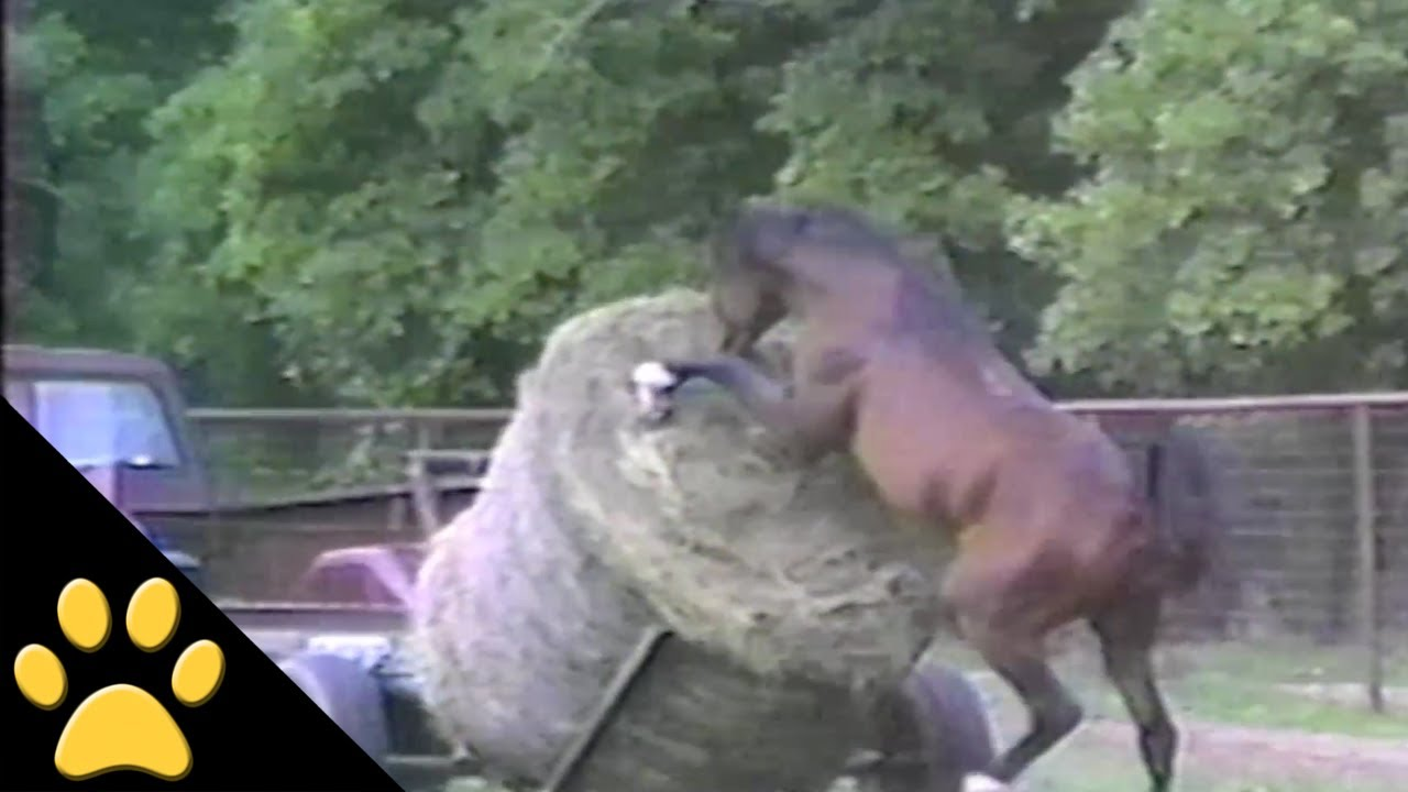 Horses, Ponies and Fails: Compilation - YouTube