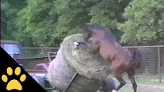 Horses, Ponies and Fails: Compilation