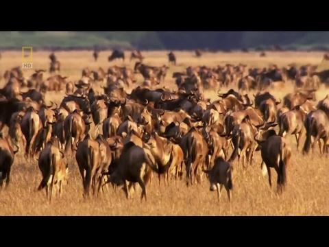 Animal Impact on Savannah - National Geographic HD
