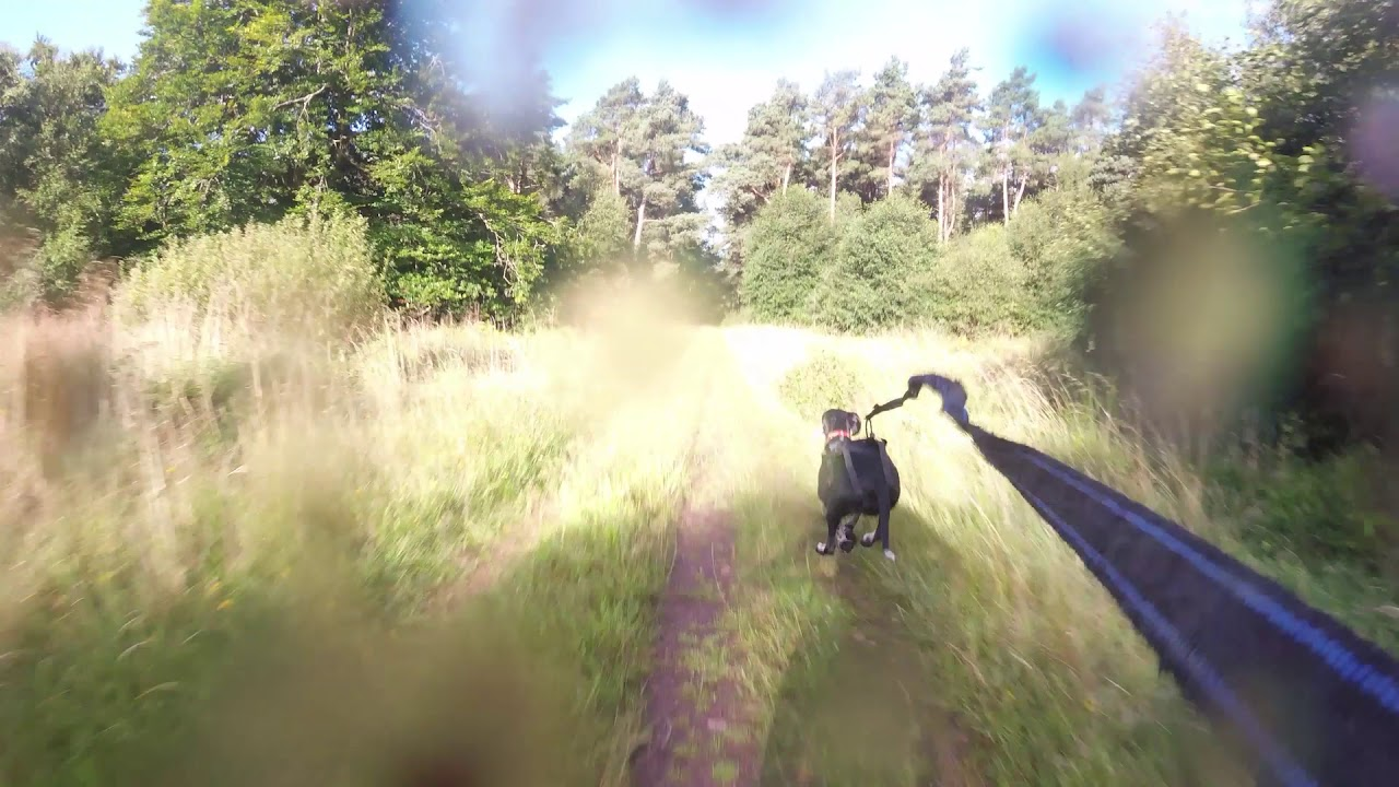 Rosie B and friends bikejor Tentsmuir Forest & Rosie B and friends bikejor Tentsmuir Forest - YouTube