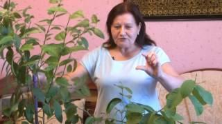 Выращивание лимона.(, 2016-12-15T10:09:47.000Z)