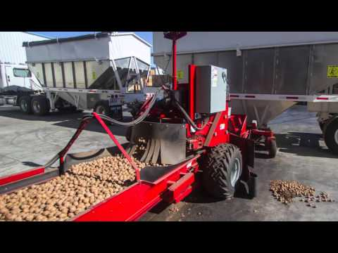 Harvesting walnuts  ceviz hasat
