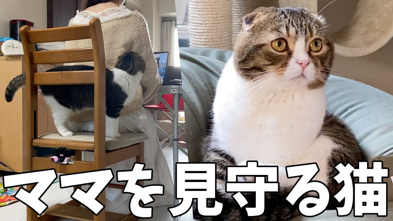 太郎 ぽこ すこ すこ
