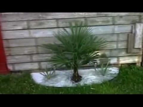Niagara Falls Tropical Palm Tree/Bamboo Garden Canada ✔🇨🇦